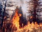 Сибирские леса охвачены огнем