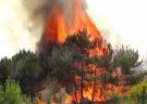 Лесные пожары охватывают все больше территорий