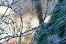 Следственный комитет РФ изъял дело об аварии с участием сына высокопоставленного полицейского чиновника