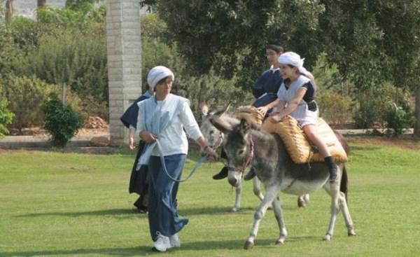 Интернет - ослики в парке Кфар-Кедем
