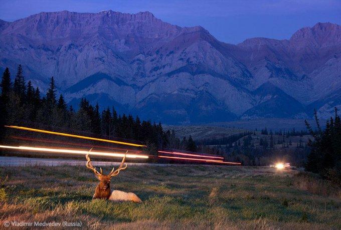 Итоги конкурса на лучшую фотографию дикой природы — 2012