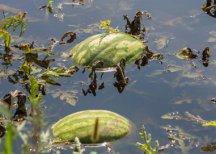 Минсельхоз и Минфин предоставят бюджетные кредиты на ликвидацию последствий наводнений