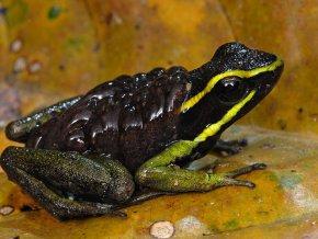Ученые открыли 60 новых видов животных